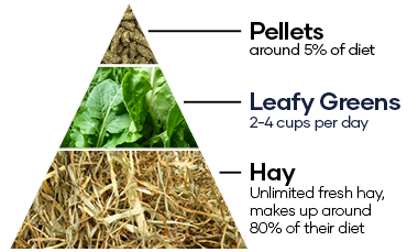 Pellets around 5% of diet. Leafy greens 2-4 cups per day. Hay - Unlimited fresh hay, makes up around 80% of their diet.