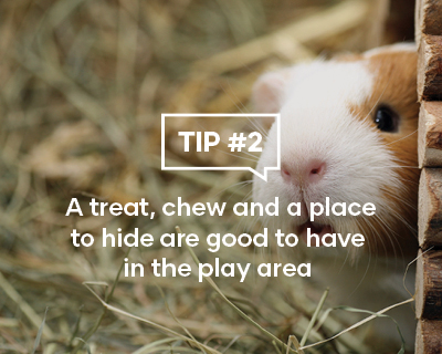 A treat, chew and a place to hide are good to have in the play area