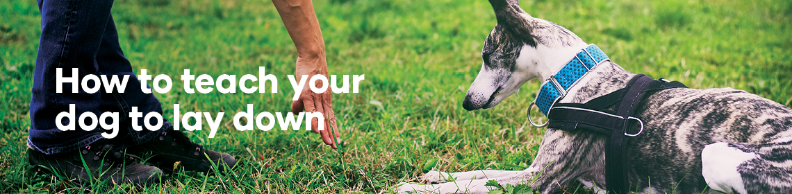 How to teach your dog to lay down