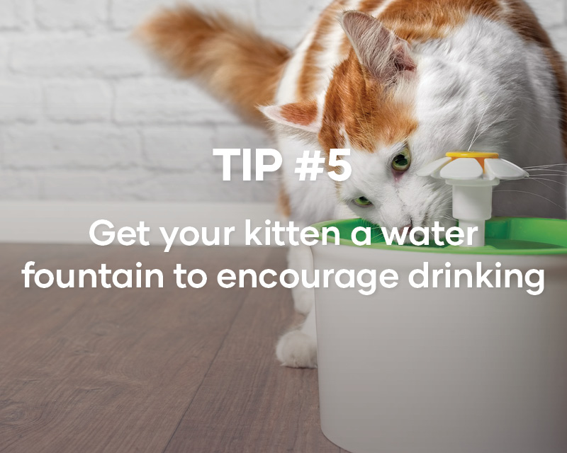 Treats are great for rewarding good behaviours with your kitten