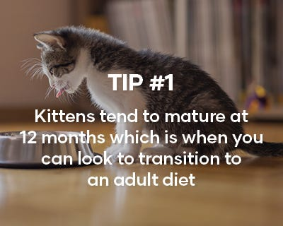 Kittens tend to mature at 12 months which is when you can look to transition to an adult diet