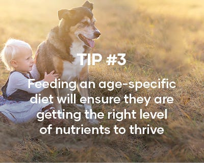 Feeding an age specific diet will ensure they are getting the right level of nutrients to thrive