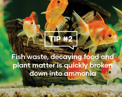 Fish waste, decaying food and plant matter is quickly broken down into ammonia