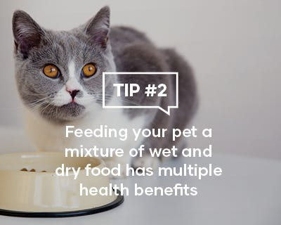 Feeding your pet a mixture of wet and dry food has multiple health benefits