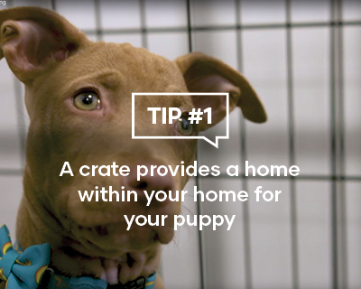 A crate provides a home for your puppy