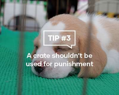 Crate Training your puppy Tip Three