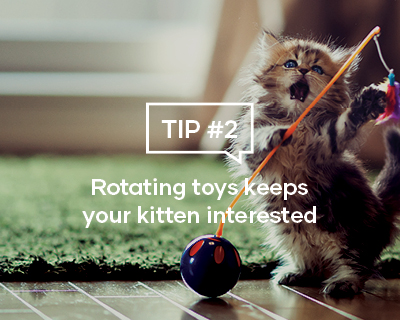 Rotating toys keeps your kitten interested