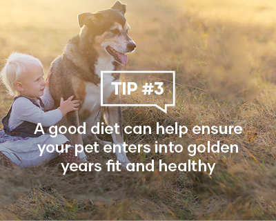 A good diet can help ensure your pet enters into their golden years fit and healthy