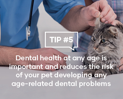 Dental Health at any age is important and reduces the risk of your pet developing any age-related dental problems