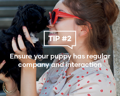 Ensure your puppy has regular company and interaction