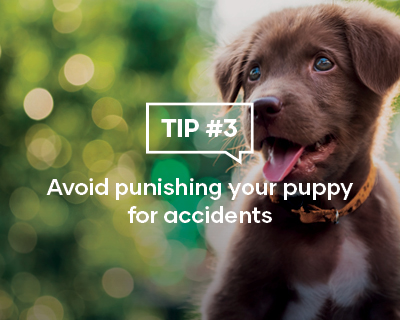 Avoid punishing your puppy for accidents