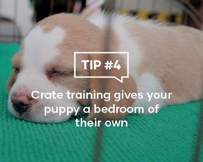 Crate training gives your puppy a bedroom of their own