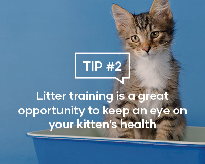 Litter training is a great opportunity to keep an eye on your kitten's health