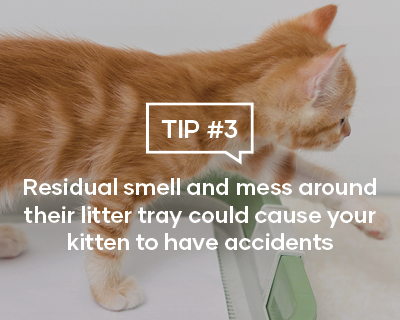 Residual Smell and mess around their litter tray could cause your kitten to have accidents