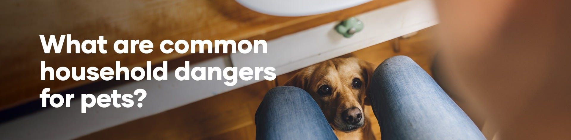 What are common household dangers for pets?