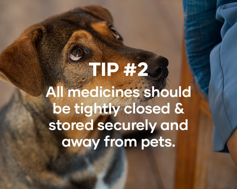Tip #2: All medicines should be tightly closed & stored securely and away from pets.