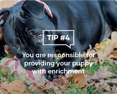 You are responsible for providing your puppy with enrichment