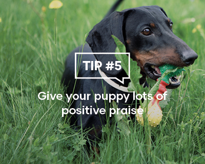 Give your puppy lots of positive praise