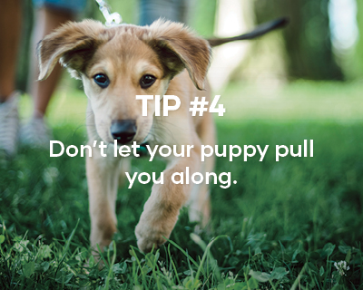 Tip #4. Don't let your puppy pull you along.