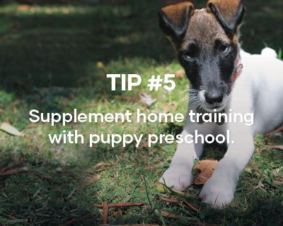 Tip #5. Supplement home training with puppy preschool.