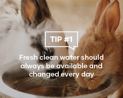 Fresh clean water should always be available and changed every day