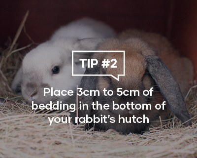 Place 3cm to 5cm of bedding in the bottom of your rabbit's hutch