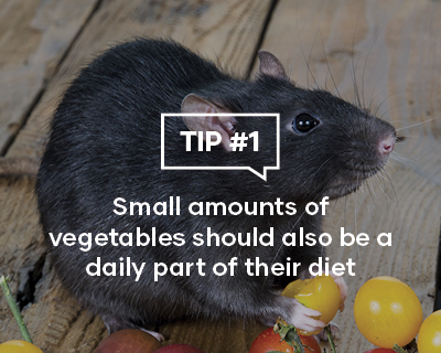 Small amounts of vegetables should also be a daily part of their diet