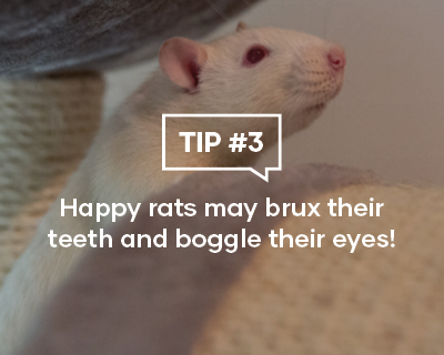 Happy rats may brux their teeth and boggle their eyes