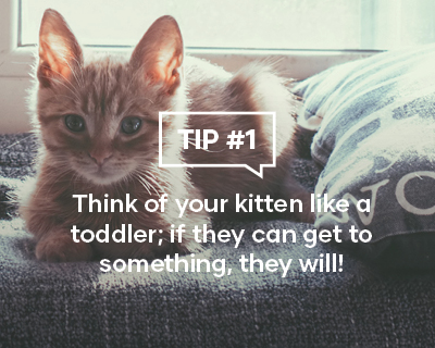 Think of your kitten like a toddler; if they can get to something they will