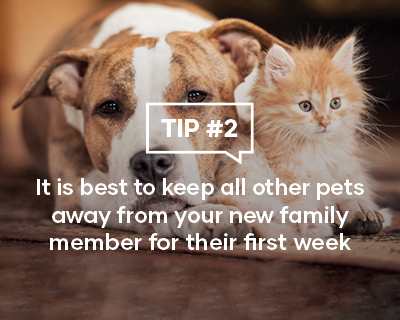 It is best to keep all others pets away from your new family member for their first week
