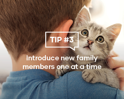 Introduce new family members one at a time
