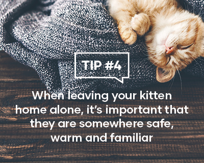 When leaving your kitten home alone, it's important that they are somewhere safe warm and familiar