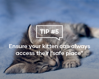 Ensure your kitten can always access their safe place