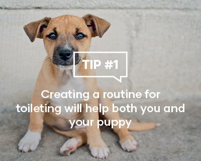Creating a routine for toileting will help both you and your puppy