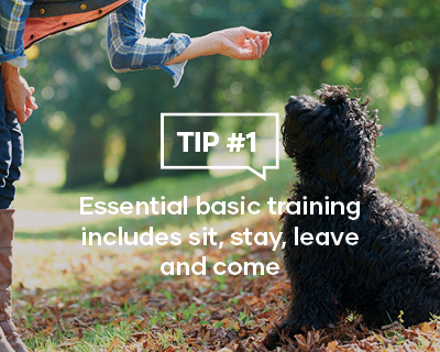 Essential basic training includes sit, stay, leave and come