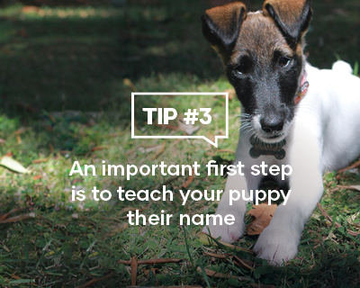 An important first step is to teach your puppy their name