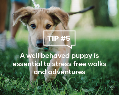 A well behaved puppy is essential to stress free walks and adventures