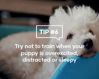 Try not to train when your puppy is overexcited, distracted or sleepy