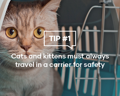 Cats and kittens must always travel in a carrier for safety