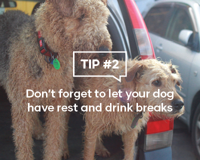 Don't forget to let your dog have rest and drink breaks