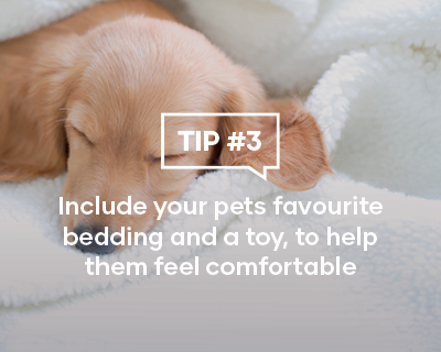 Include your pets favourite bedding and a toy, to help them feel comfortable