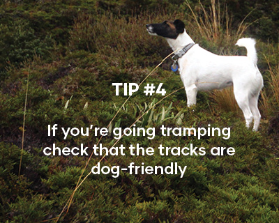 If you're going tramping check that the tracks are dog-friendly