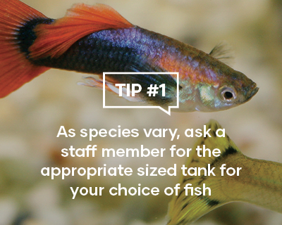 As species vary, ask a staff member for the appropriate sized tank for your choice of fish