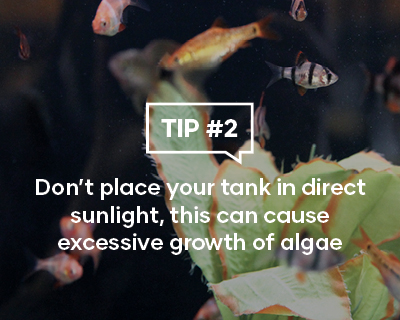 Dont place your tank in direct sunlight, this can cause excessive growth of algae