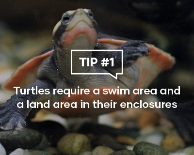 Turtles require a swim area and a land area in their enclosures