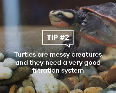 Turtles are messy creatures and they need a very good filtration system