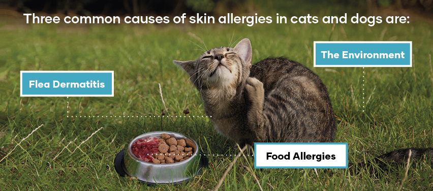 Three common causes of skin allergies in cats and dogs are Flea Dermatitis the environment food allergies