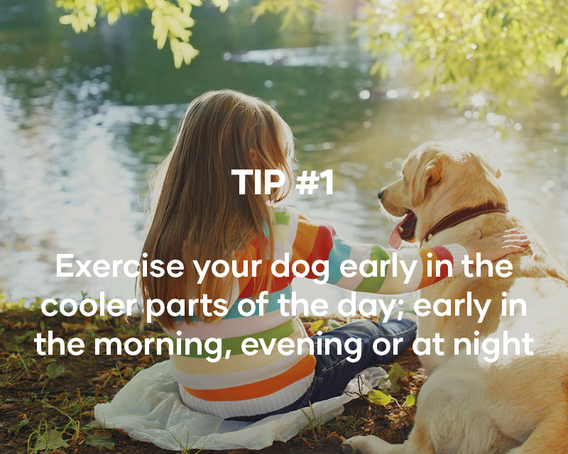 Excersize your dog early in the cooler parts of the day, early in the morning, evening or at night