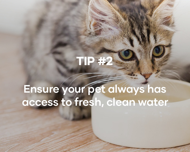 Ensure your pet always has access to fresh, clean water
