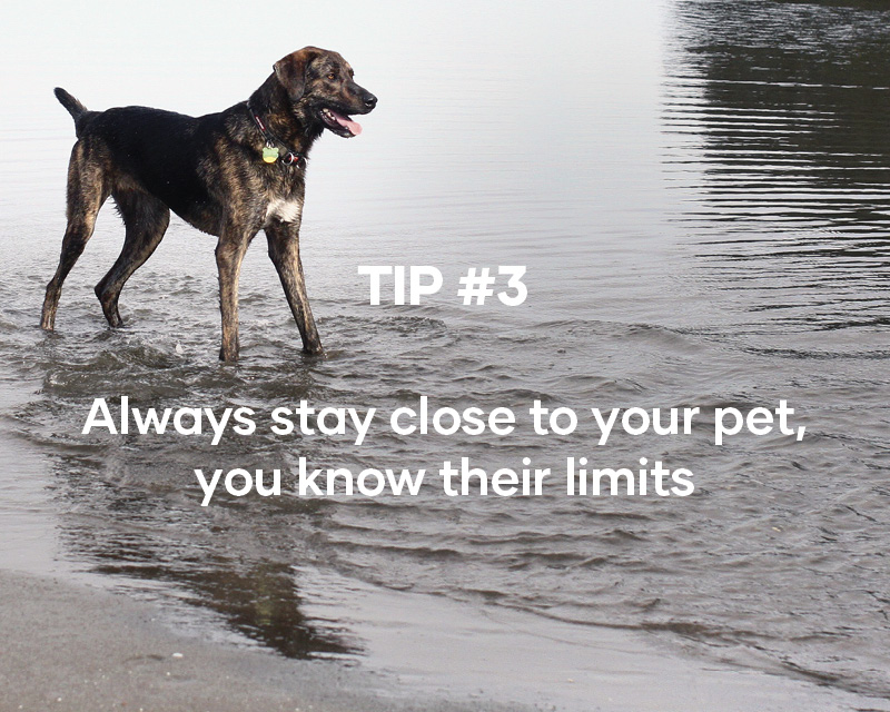 Always stay close to your pet, you know their limits
